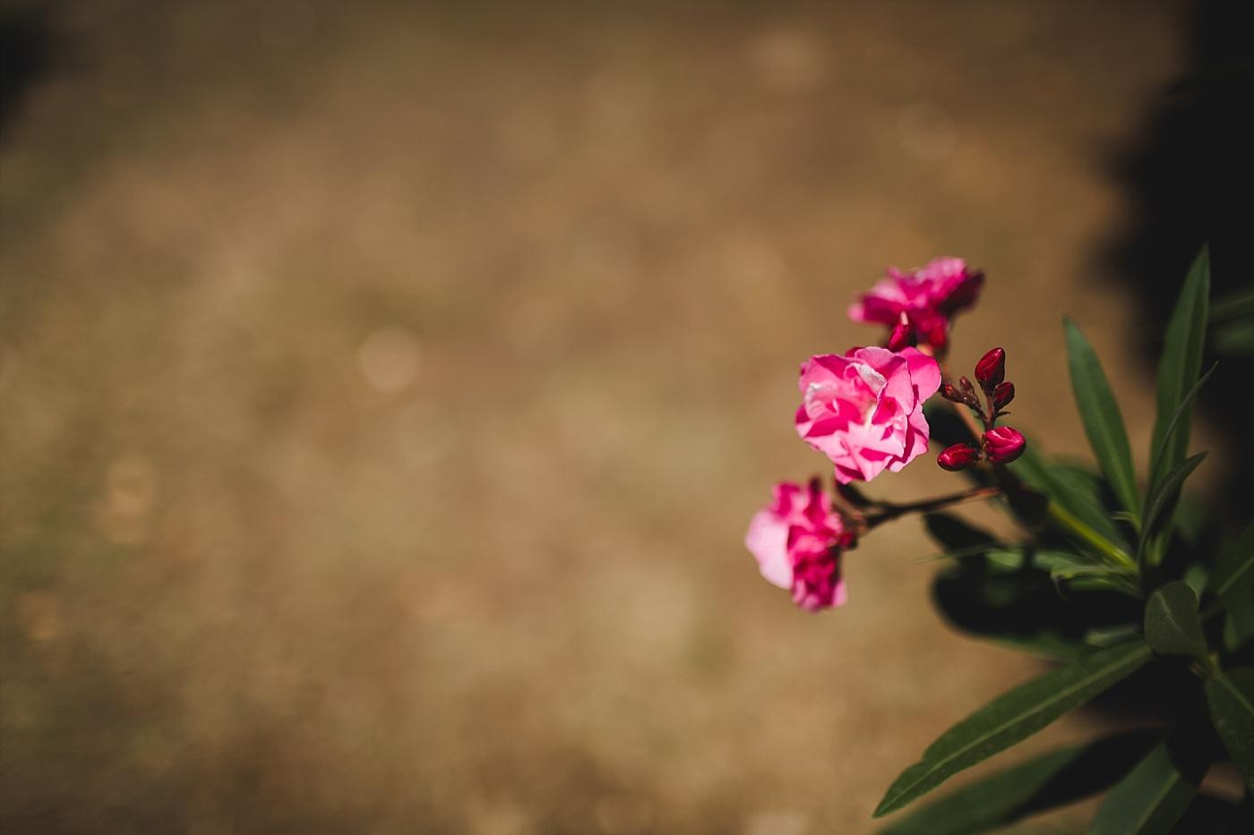 mirela bauer photography split love session